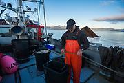 Commercial black cod fisherman, longlining method, off Kruzof Island, Sitka, Alaska, USA