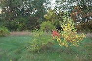 Autumn hillside colors, rural southern Wisconsin