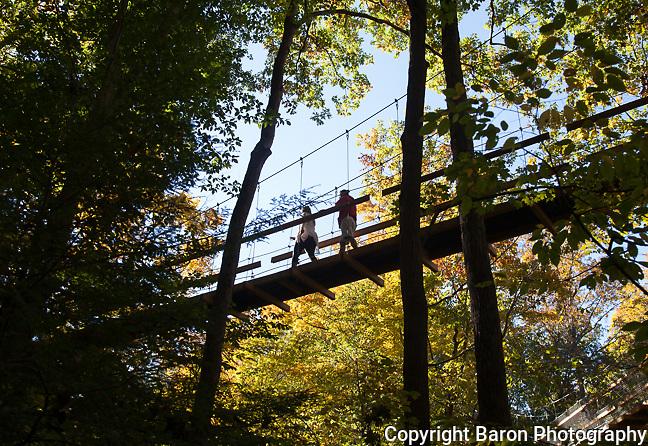 Holden Arboretum Canopy walk