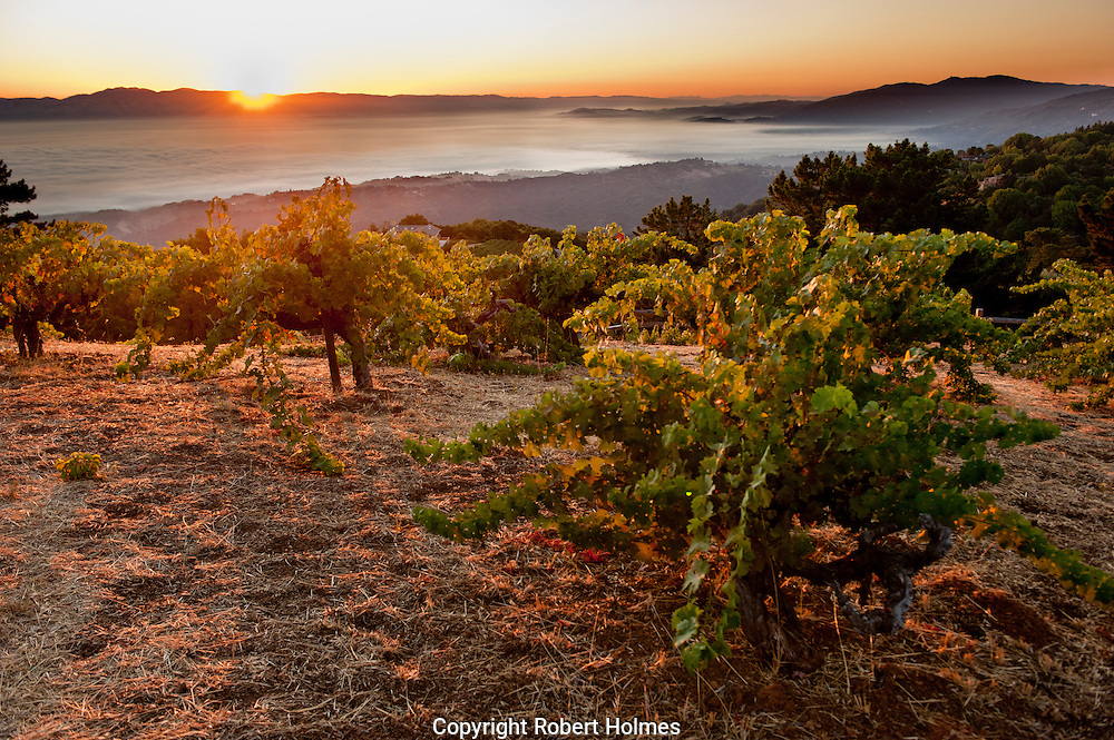 Ridge Monte Bello Vineyards, Santa Cruz Mountains, Cupertino, California