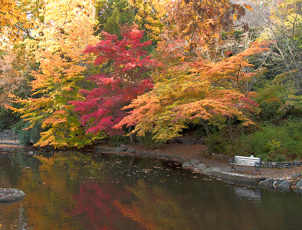Brilliant fall color shelters an empty park bench on Lithia Park's Lower Duck Pond; early morning, Ashland, Oregon.