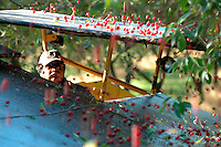 Shaker driver Noel Mosqueda working on the last day of harvest on Dave Alpers' Red Path Orchards in East Leland.