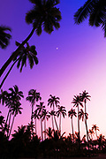 Coconut palms and moon at Pu'uhonua O Honaunau National Historic Park, The Big Island, Hawaii USA