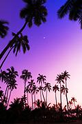 Coconut palms and moon at Pu'uhonua O Honaunau National Historic Park, The Big Island, Hawaii USA