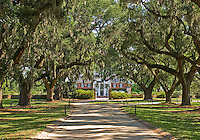 Boone Hall Plantation Avenue of the Oaks.