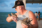 A man feeds the birds on the pier in Waikiki.