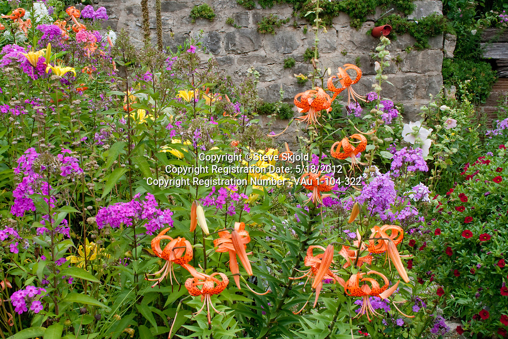 Colorful flower garden with orange tiger lilies and purple phlox. Lanesboro Minnesota MN USA