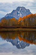 0438 Fall Reflections - Grand Teton National Park, Wyoming: Oxbow Bend is the gathering place of wildlife for the Grand Teton National Park. The mirror-like water reflection is the reason photographers flock to this area.