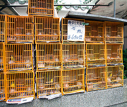Birds for sale, Bird Market, Hong Kong, China.