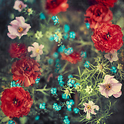 Spring Flowers - double exposure<br /> Society6 prints &amp; more: http://bit.ly/2FOREcr<br /> REDBUBBLE prints &amp; more: http://rdbl.co/2FLOeqR