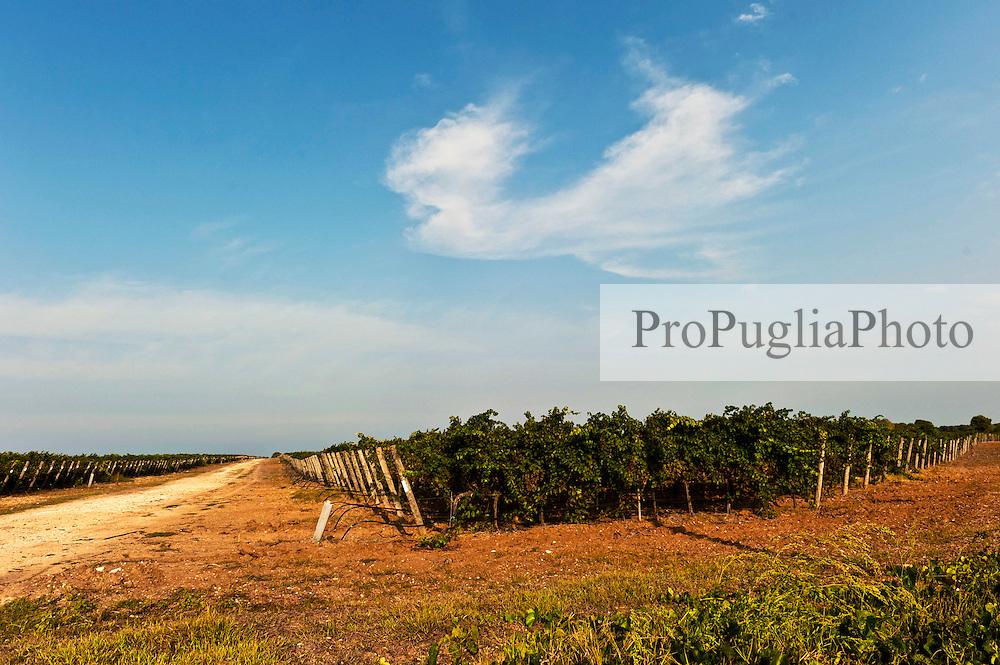 Vigneto lungo la costa sud di Brindisi