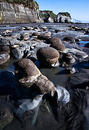 Geologic formations of Tongaporutu Beach in New Zealand at low-tide, including the famous Elephant Rock in the distance
