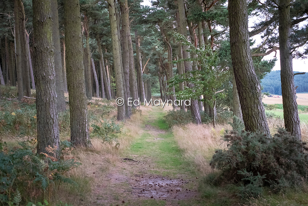 Woodland approach to St Cuthbert's Cave, Kyloe Hills, Northumberland, England, UK<br /> Photo: Ed Maynard<br /> 07976 239803<br /> www.edmaynard.com