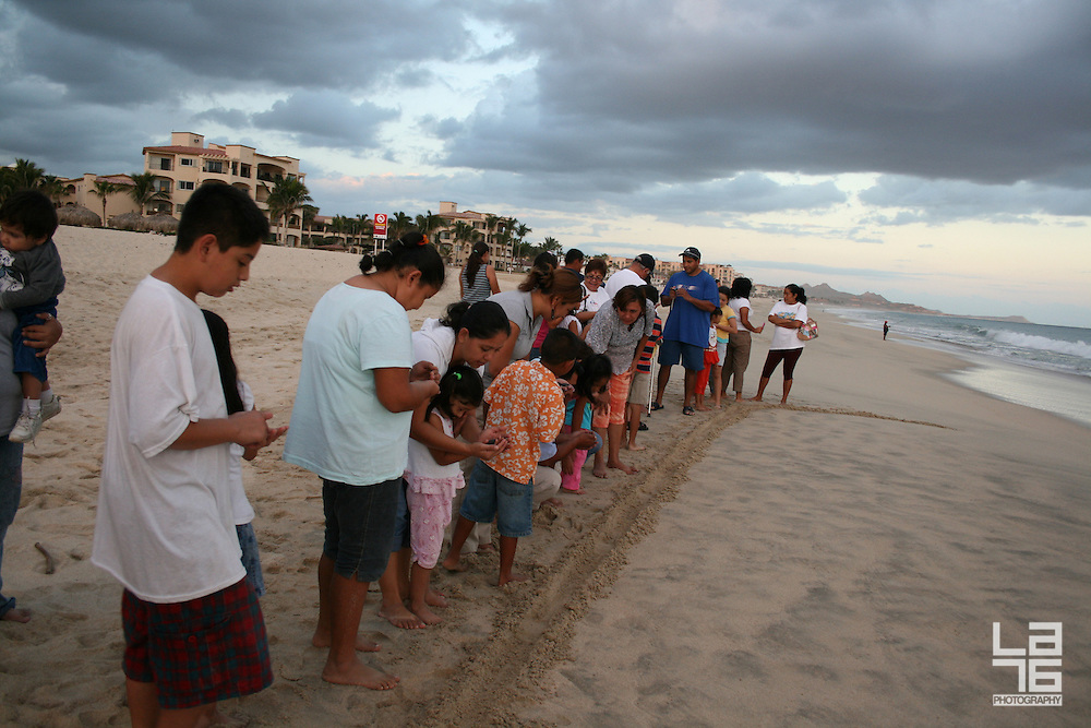 Turtle Release in Los Cabos, at the Beach Club of Club Campestre. <br />