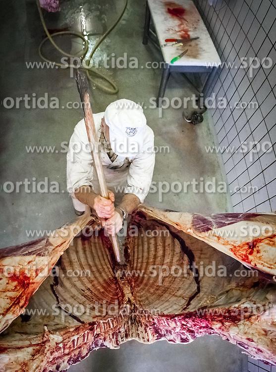 THEMENBILD, regionale Metzger im Fokus. Qualitaet statt Quantitaet, steht bei den meisten mittelstaendischen Fleischhauereien, bei ihren Fleischprodukten im Vordergrund. Mit viel Liebe vom Bauer aus der Region, werden Rinder, Kaelber und Kuehe, wie hier bei der Firma Moelltal Fleisch in Winklern, selbst geschlachtet und zu Qualitaetsprodukten weiterverarbeitet. Nur Schweinefleisch, das die Bauern des Tales nicht oder nicht zur Gaenze selbst produzieren koennen, wird von Vertragspartnern aus anderen Regionen Kaerntens zugekauft und mit Moelltaler Rezepten zu heimischen Spezialitaeten weiterverarbeitet. Im Bild Koerperlich anstrengende Handarbeit, mit einer Spalt-Axt teilt ein Metzger das Vieh in zwei Haelften. Bild aufgenommen am 28.03.2012. EXPA Pictures © 2012, PhotoCredit: EXPA/ Juergen Feichter