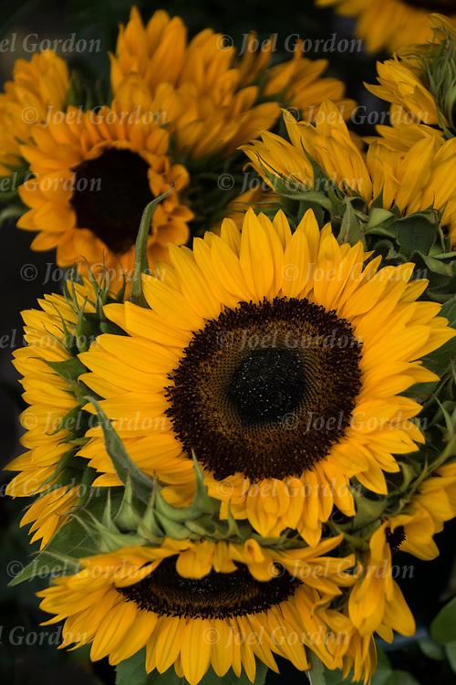Sunflowers in outdoor flora shop.