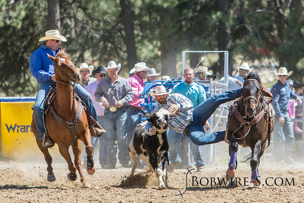 Steer wrestler Cole McNamee makes his run in the first performance of the Elizabeth Stampede on Saturday, June 2, 2018.