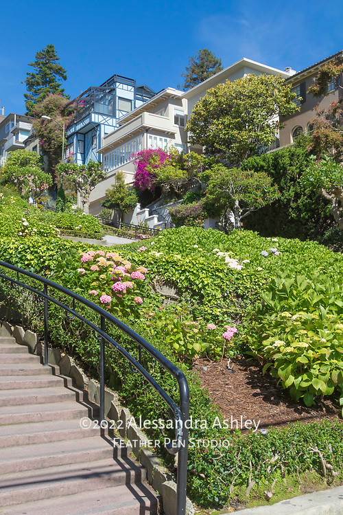 San  Francisco's Lombard Street hydrangea gardens, viewed from the base of the hill.