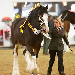 Mrs Andrea Walsh's Nangreaves Duchess of Buckhurst<br /> f  2012<br /> Sire  Moorfield Edward<br /> Dam  Sladbrook Miss Jones