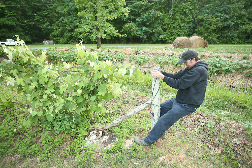 Pittsboro, NC - May 12: Trace does chores and straightens the grape vine at the farm at Circle Acres. (Photo by Logan Mock-Bunting)