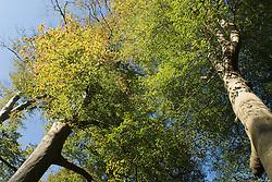 Boekesteijn 's-Graveland, Wijdemeren