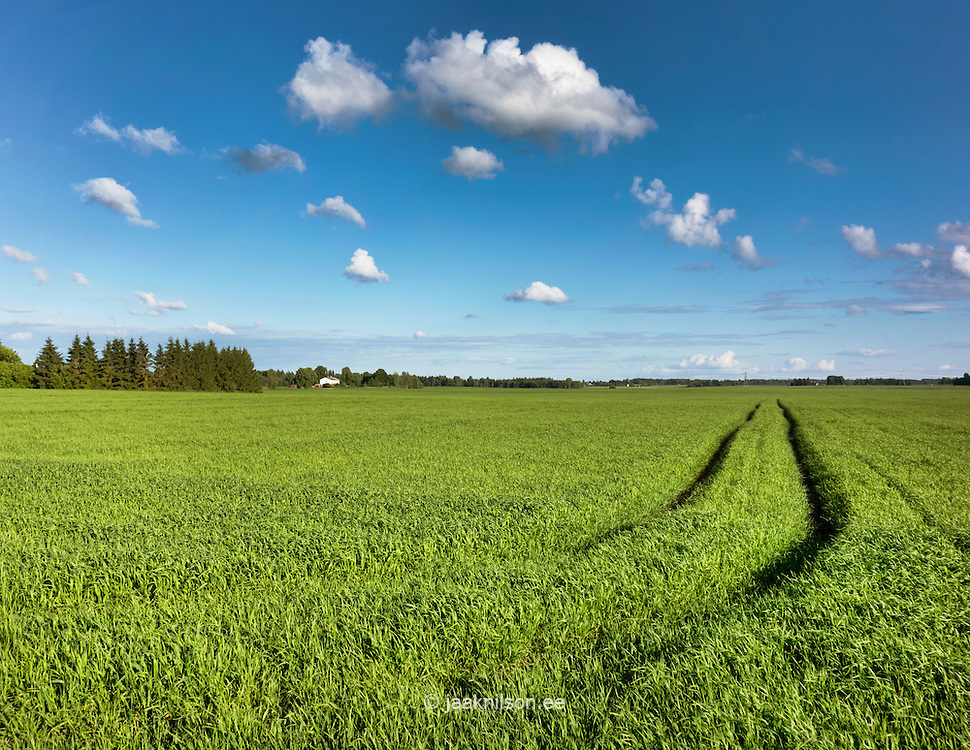 Tractor tyre tracks in field. Agricultural rural landscape. Cornfield.