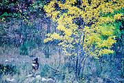 late October, Zion National Park, Utah