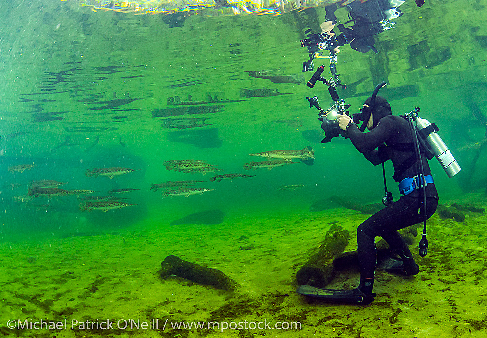 A Cameraman films Florida Gar, Lepisosteus platyrhincus, in Blue Springs State Park near Deltona, Florida, for a televison documentary in Japan.