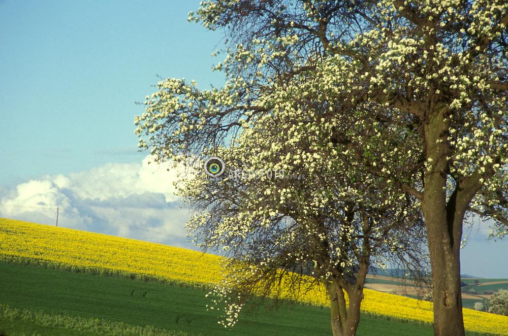 Austria, Europa.Maio,1994..Campo florido, interior da Austria,estrada para a Alemanha./ Flowery fields, countryside of Austria, road to Germanay..Foto Adri Felden/Argosfoto