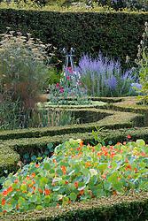 The herb garden at Ballymaloe Cookery school with nasturtiums, bronze fennel and perovskia. Sweet peas ( Lathyrus odoratus ) growing up metal obelisk