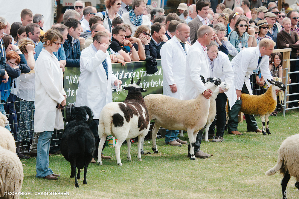 Royal Highland Show 2014. Sheep interbreed. PAYMENT TO CRAIG STEPHEN 07905 483532