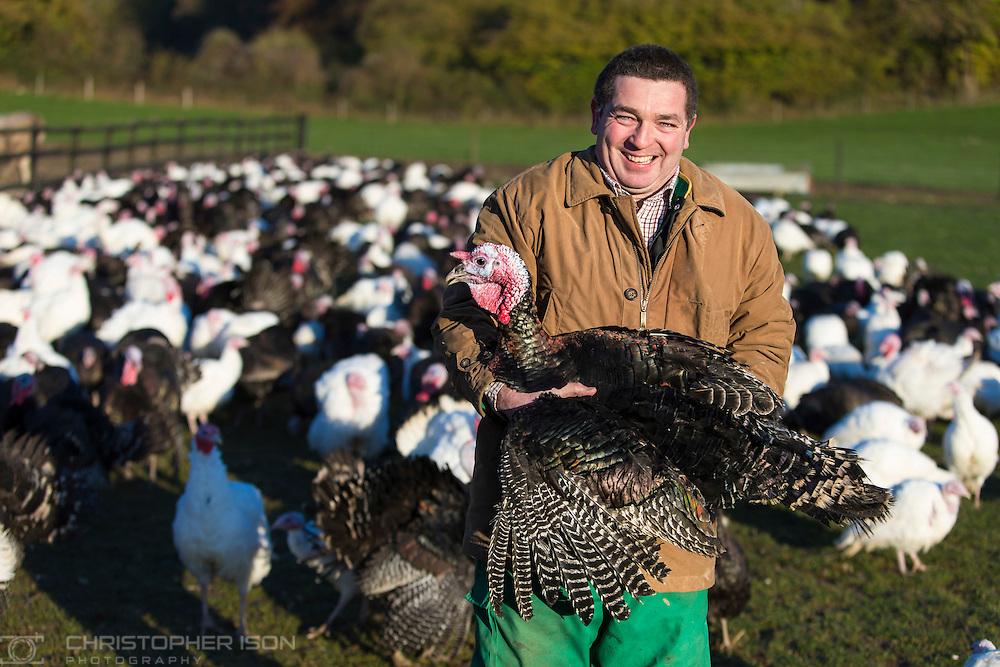Free range turkey farmer Simon Bridger picks up one of his bronze stag birds at Ashford Farm near Petersfield in Hampshire as Christmas approaches.