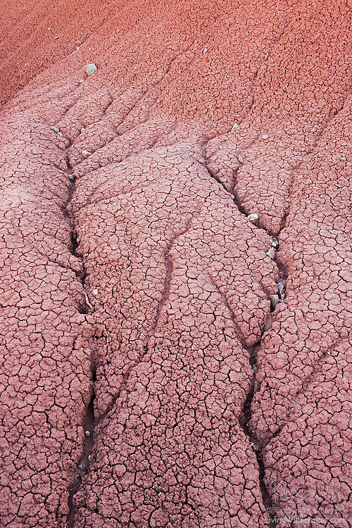 The deep branches in the soil of the Painted Hills in John Day National Monument, Oregon illustrate the dendritic drainage pattern. Numerous feeder streams, creeks and rills flow into the main channel, resulting in a deep channel that resembles the branches of a tree.