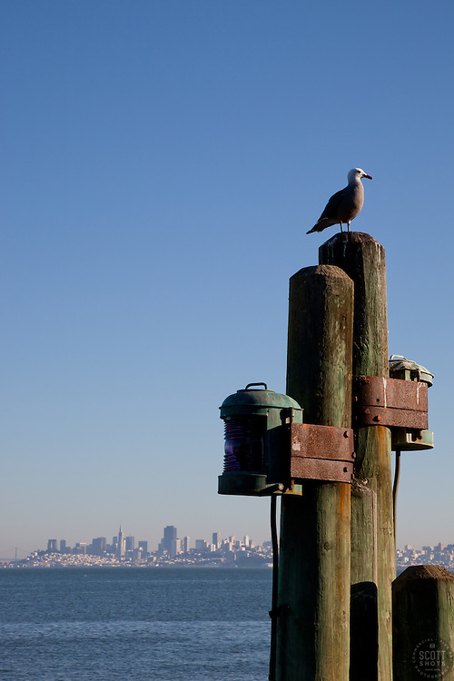"""""""Seagull and San Francisco 2"""" This seagull was photographed in Sausalito, San Francisco can be seen in the distance."""