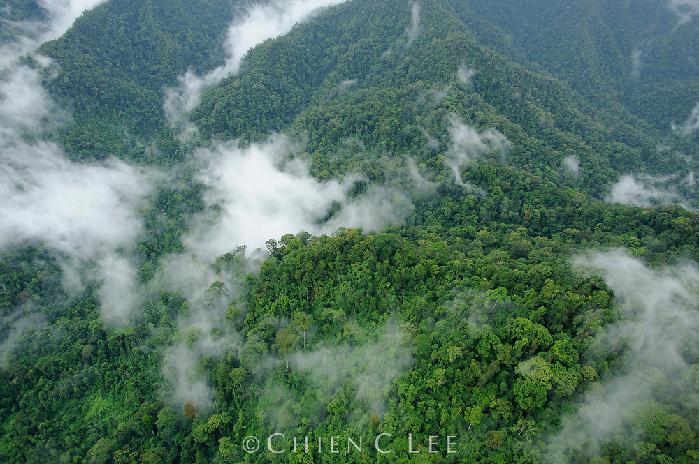 An aerial view of virgin rainforest in eastern Sabah, northern Borneo.