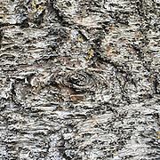 Bark of tree at Greystones in Diyatalawa.<br /> sent to Laki for art work<br /> 2016
