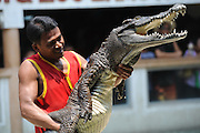 BANGKOK, April 27, 2016 <br /> <br /> Two men pull a crocodile during a show at the Crocodile Farm and Zoo outside Bangkok, Thailand, April 27, 2016. <br /> ©Exclusivepix Media