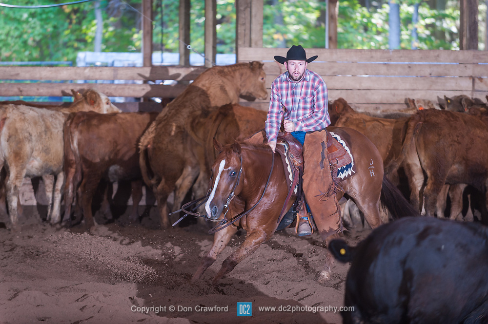 September 24, 2017 - Minshall Farm Cutting 6, held at Minshall Farms, Hillsburgh Ontario. The event was put on by the Ontario Cutting Horse Association. Riding in the $25,000 Novice Horse Non-Pro Class is Eric Bouchard on The Reyl SLim Shady owned by the rider.
