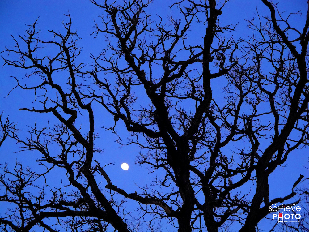 The moon behind the bare trees of winter.