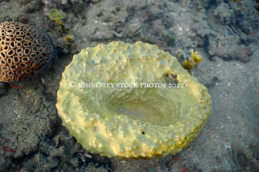 A yellow sponge on Turtle Reef in Talbot Bay.