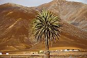 Ile de Fuerteventura