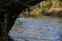 Denham, UK. 5 February, 2020. The river Colne at Denham Ford in Denham Country Park. Works planned in conjunction with the HS2 high-speed rail link are expected to include a Bailey bridge crossing just beyond the ancient alder tree on the left and a compound in ancient woodland to the right which forms part of a nature reserve. Environmental activists are occupying nearby trees in an attempt to prevent the work.