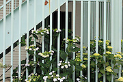 flower plant growing along a metal fence