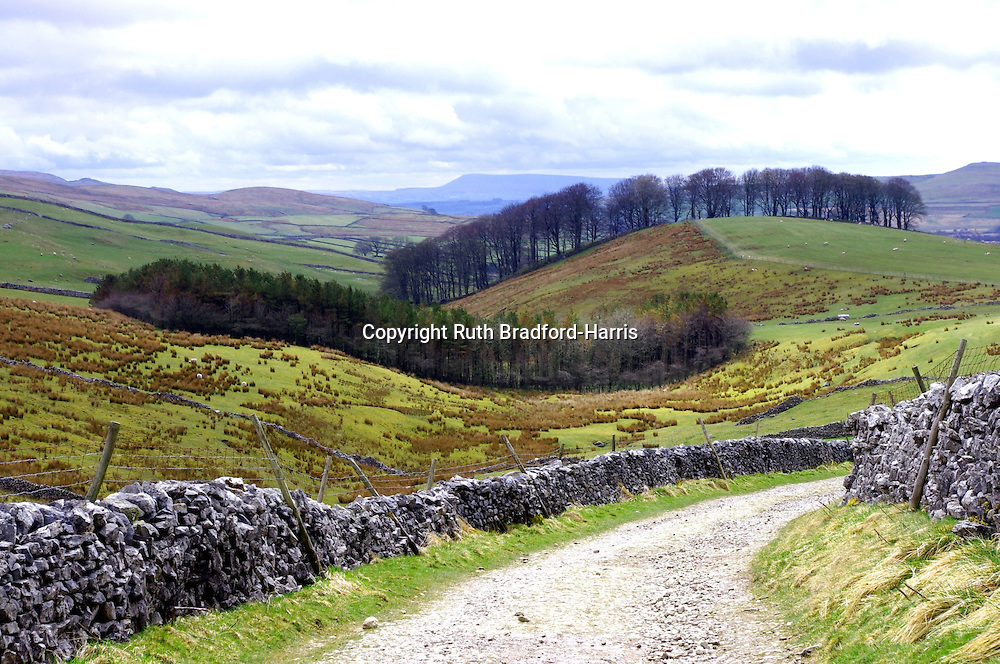 Interlocking tree lines, hugging the undulating landscape on the lower slopes of Penyghent (one of the 'Three Peaks') on the classic ascent from Horton Scar Lane.<br /> <br /> Date taken: 04 May 2013.