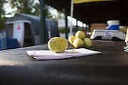 Pawpaws are displayed on a table at the 18th annual Pawpaw Festival at Lake Snowden on Sept. 16, 2016.
