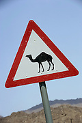 A roadsign warning against camels crossing the road.