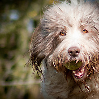 Images of dogs taken by Brighton Dog Photography.