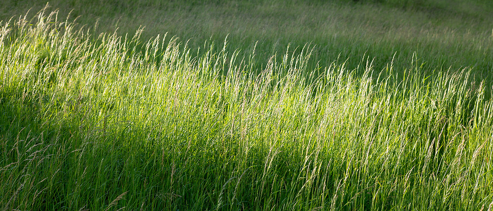 Impressions of Nature - grass in meadow, England