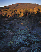 Sunrise, Mt. Trumbull (elev. 2447), Mt. Trumbull Wilderness & basaltic lava, Grand Canyon National Park, Arizona..Subject photograph(s) are copyright Edward McCain. All rights are reserved except those specifically granted by Edward McCain in writing prior to publication...McCain Photography.211 S 4th Avenue.Tucson, AZ 85701-2103.(520) 623-1998.mobile: (520) 990-0999.fax: (520) 623-1190.http://www.mccainphoto.com.edward@mccainphoto.com.