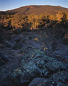 02599 Mount Trumbull Wilderness area Arizona AZ lava rock remote